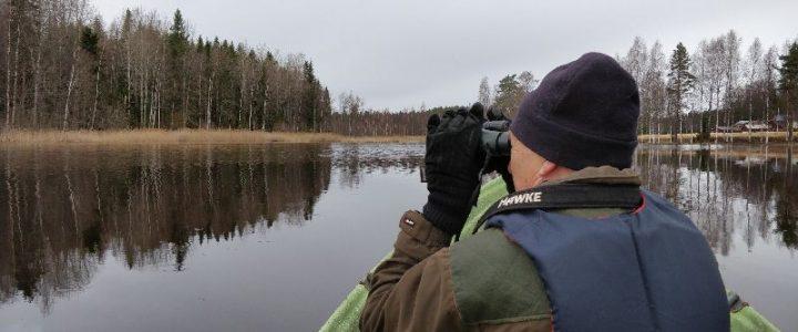 Pitkäjärven vesilintukanta 2019